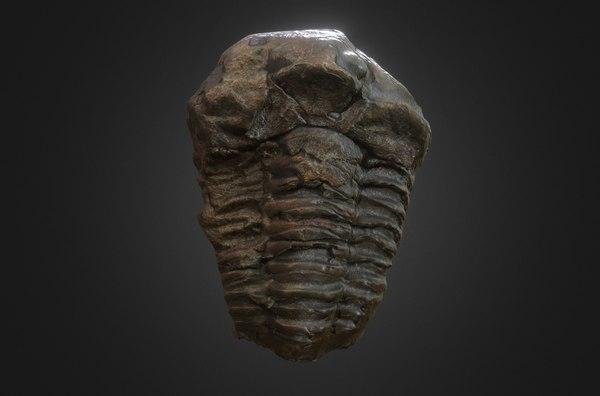 3d fossilized trilobyte model