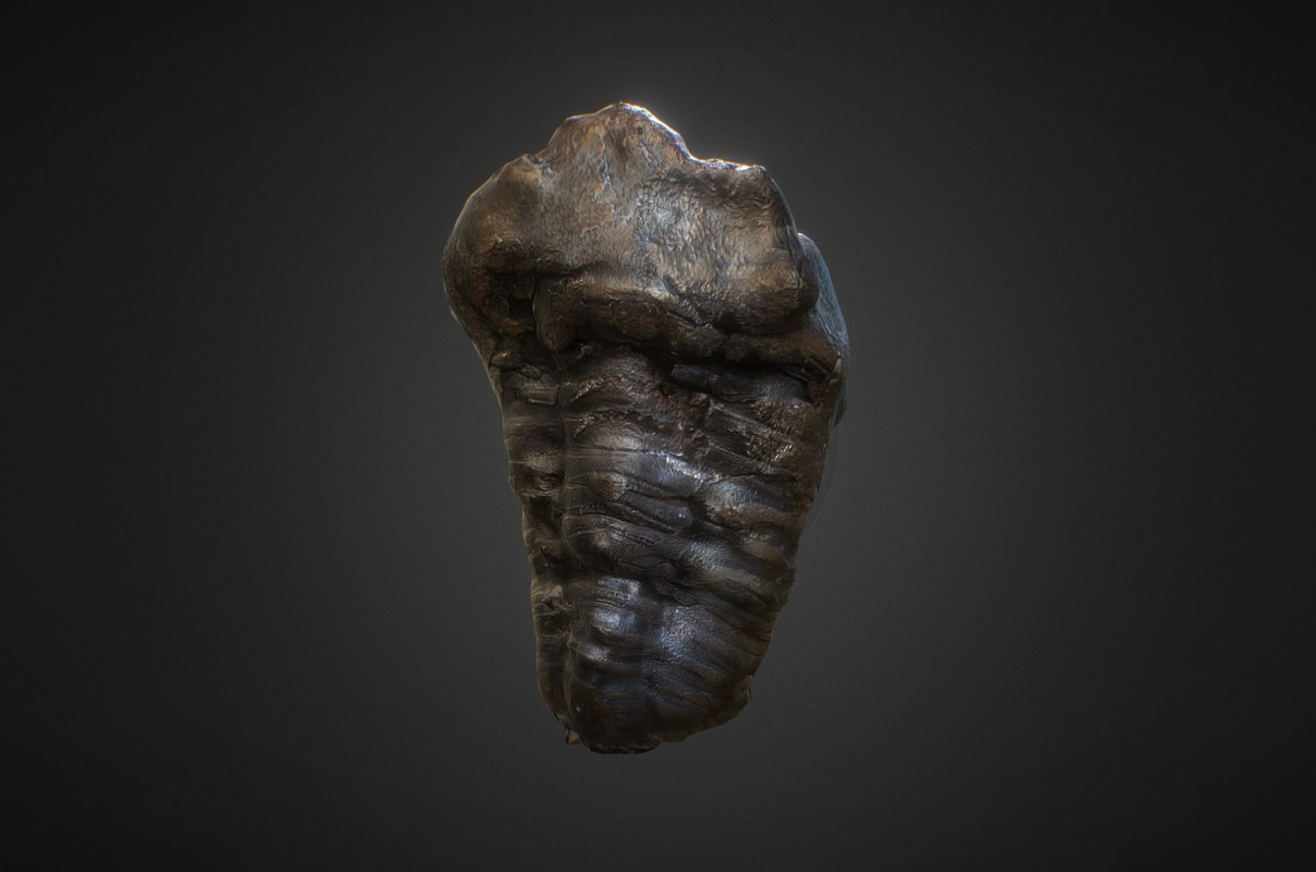 obj fossilized trilobyte