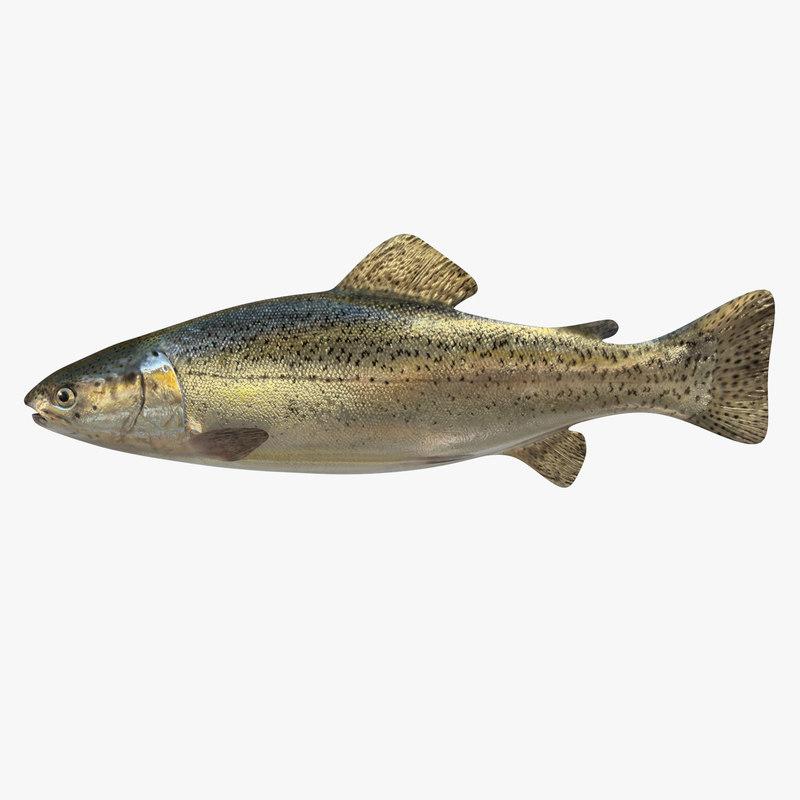 3d trout