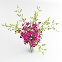 orchid flower dentrobium max