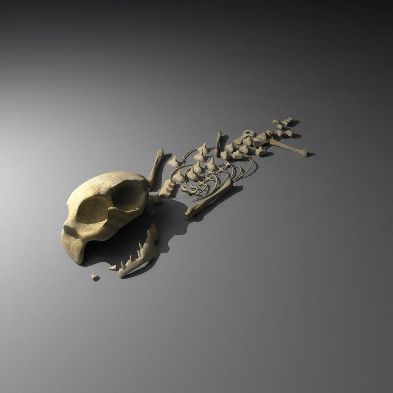 3d model cat skeleton