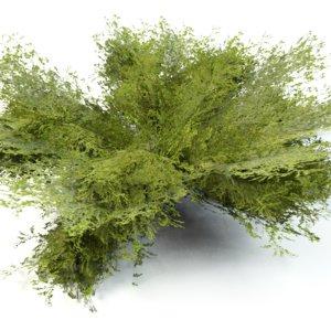 3ds bush grow