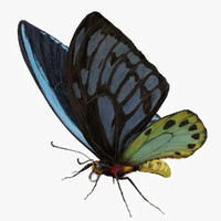 3d model of ornithoptera alexandrae butterfly