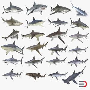 max sharks 9