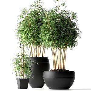 3d model bamboo plants