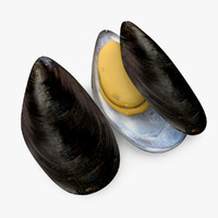 3d sea creature mussel model