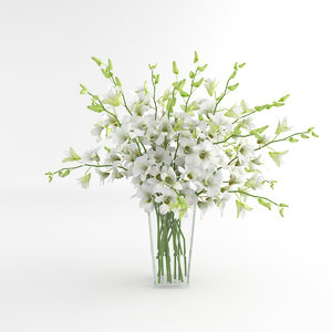 3d orchid flower white model