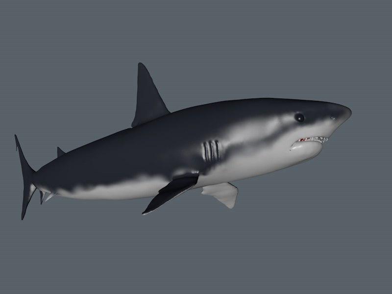 3d white shark model