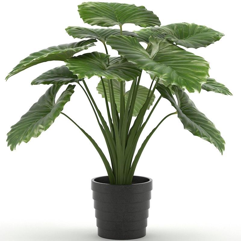 3d taro plant
