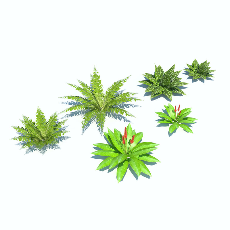 3d tropical bushes low-poly
