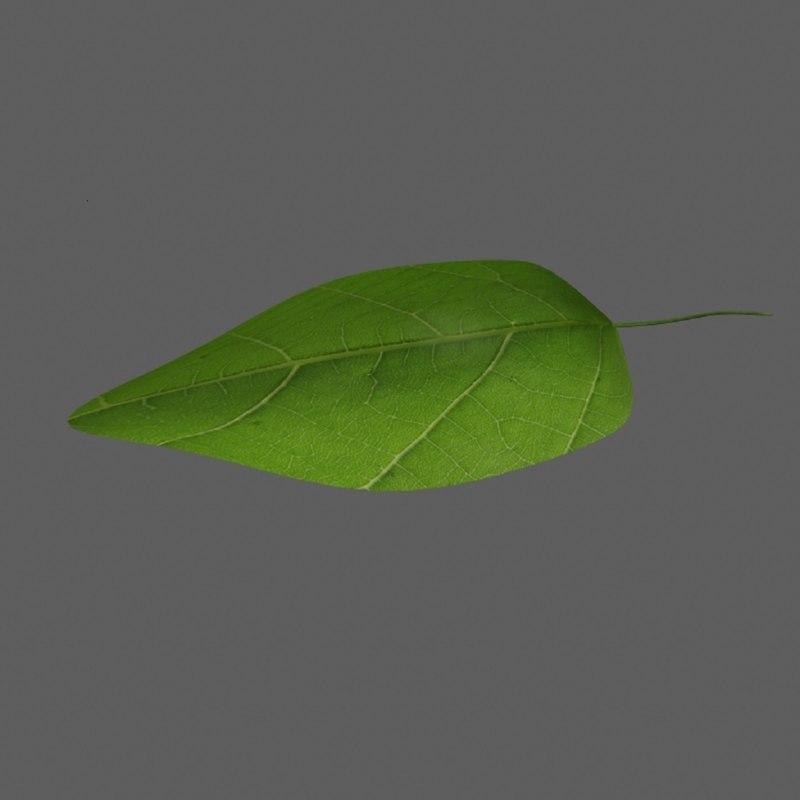 leaf obj