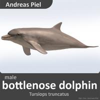male bottlenose dolphin c4d