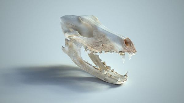 wolf skull 3d max