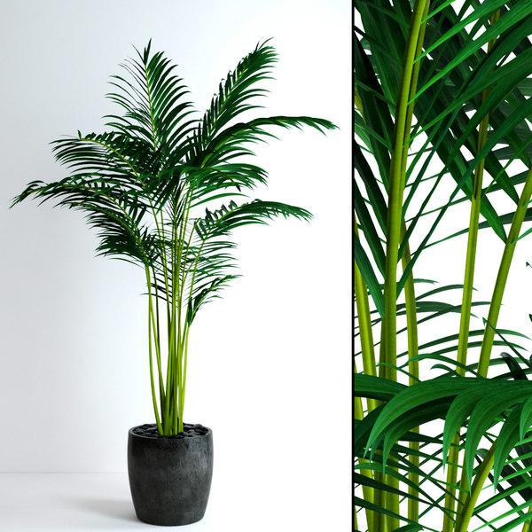 3d model realistic areca palm