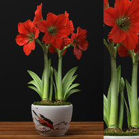 3d max red amaryllis