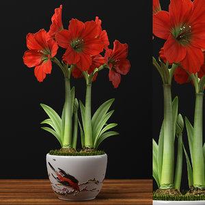 3d max red amaryllis