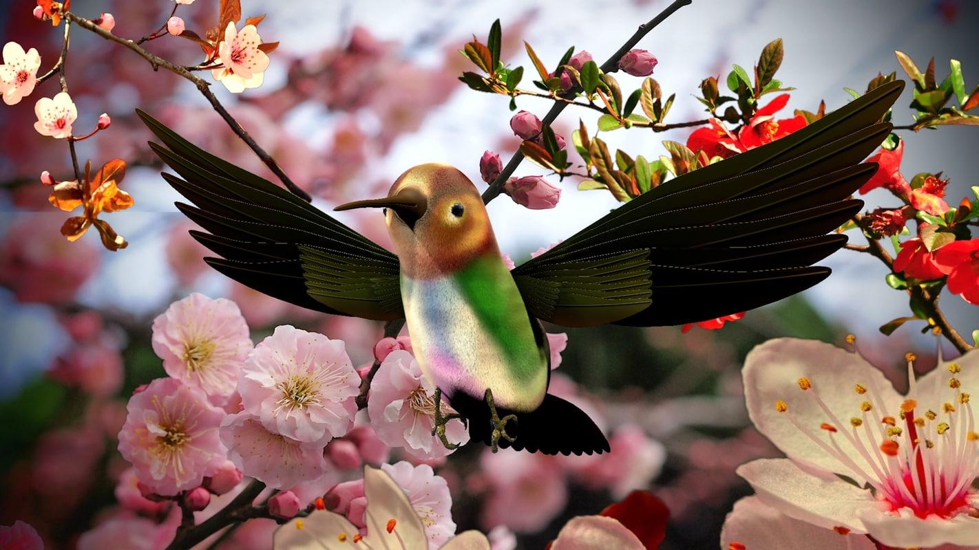 hummingbird birds c4d