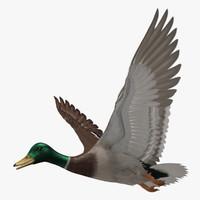 3d model anas platyrhynchos mallard duck
