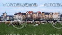 Sheep in Duesseldorf