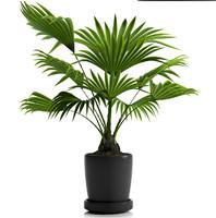 fan palm plant pot 3d max