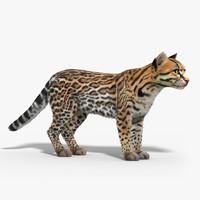 Ocelot cat(FUR)