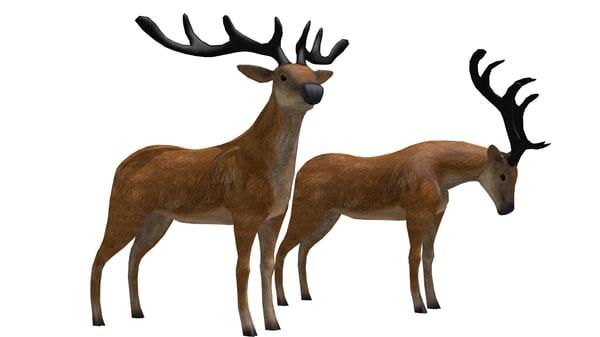 3d buck deer