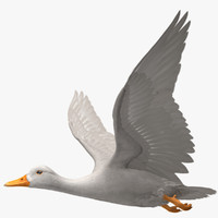 "Anas Platyrhynchos ""White Domestic Duck"