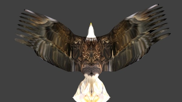 eagle rigged fbx free