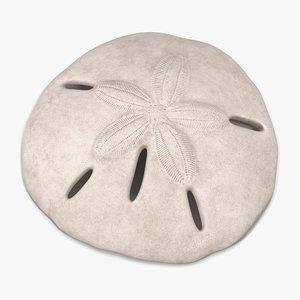 3d sea shell sand dollar