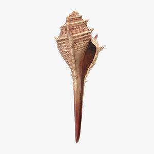 3d seashell 3