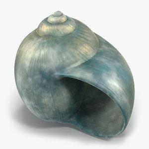 3d seashell 2