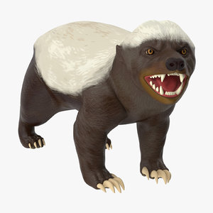 3d honey badger model