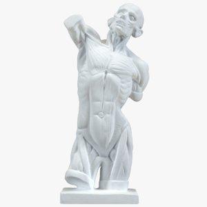 3d anatomic figure