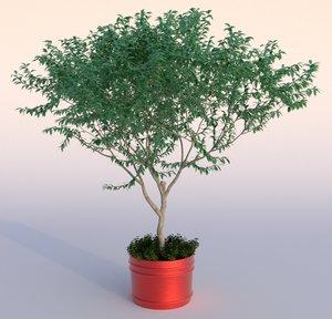 3d model outdoor plant 1