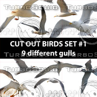 Cut out bird photo set#1: Gull birds in PNG
