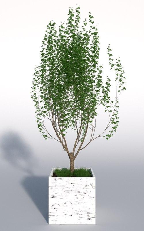 outdoor plant 2 3d obj