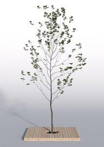 3d model outdoor plant 3