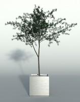 3d model outdoor plant 4