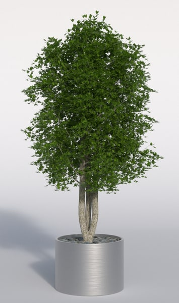 3d obj outdoor plant 5