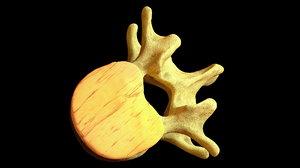 3d spinal discs bones model
