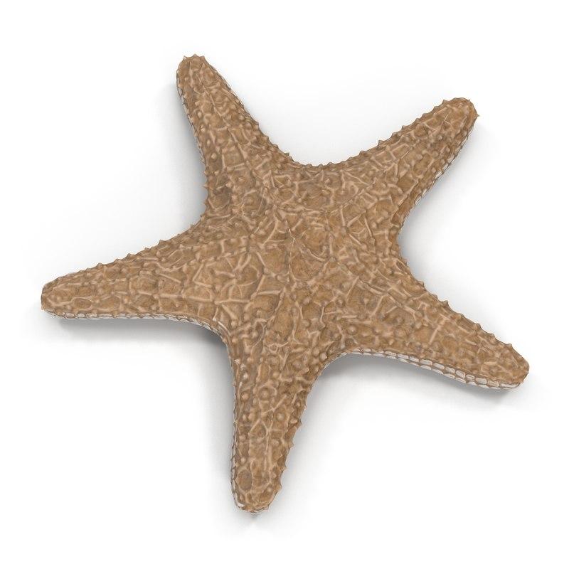 3d model starfish fur