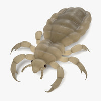 3d model female louse
