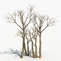 Dry Tree 16
