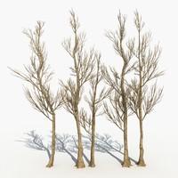 Dry Tree 17
