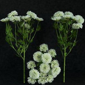 max gerbera flower petal chrysanthemum