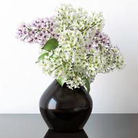 3d model lilac plant flower
