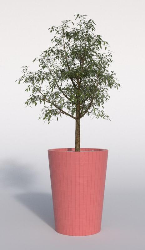 3d outdoor plant model