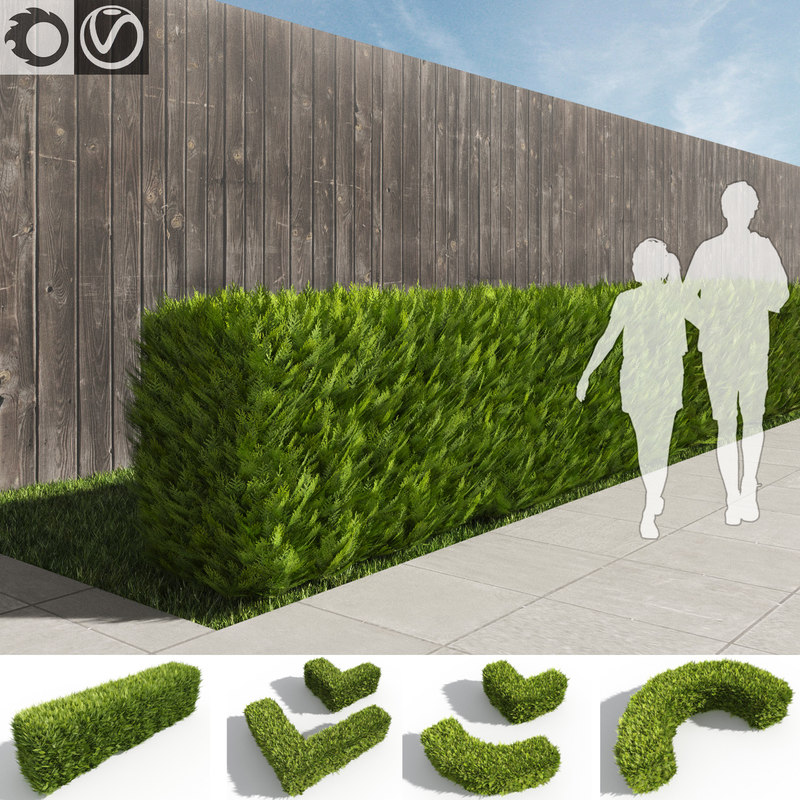 thuja hedges set 3d model