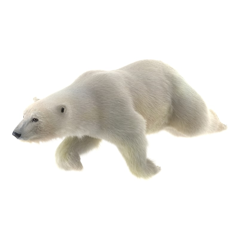 3d model polar bear fur swimming