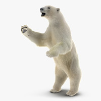 polar bear fur pose 3d ma